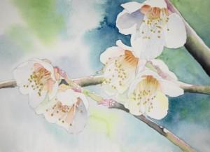 2016/4/13~4/18 癒しの透明水彩画展
